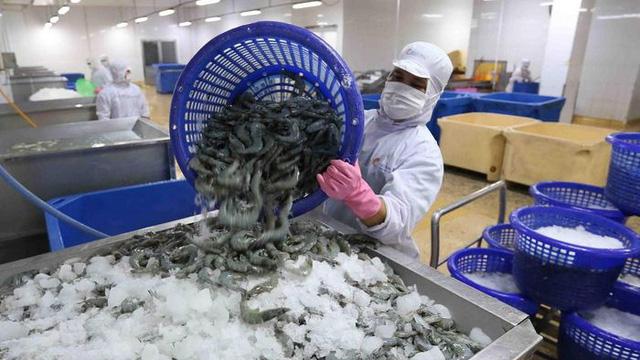 """Cảng tại """"thủ phủ tôm"""" Trung Quốc tạm ngừng nhập khẩu thủy sản đông lạnh từ các nước, trong đó có Việt Nam"""