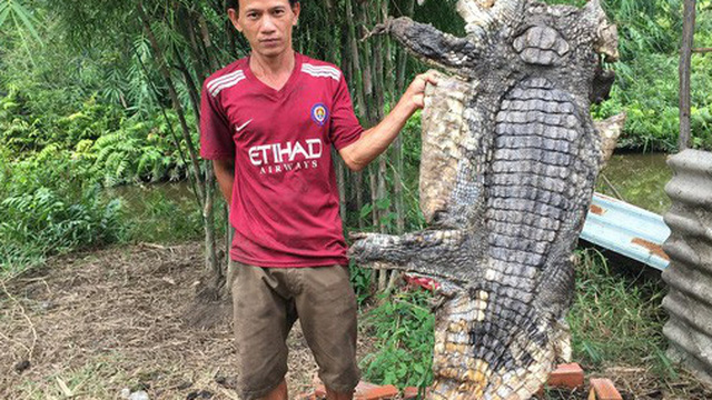 Có khả năng một số người đã thả cá sấu ra ngoài tự nhiên