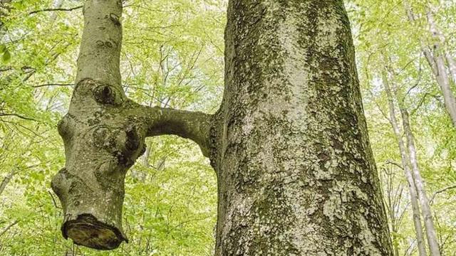 13 bức ảnh hiếm có khó tìm của thiên nhiên mà bạn phải may mắn lắm mới được chiêm ngưỡng