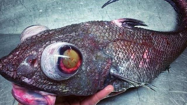 Hé lộ bộ sưu tập ''quái vật biển'' ngư dân bắt được trong nhiều năm qua