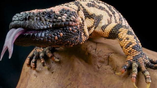 Động vật hoang dã: Những chiếc lưỡi đặc biệt và hữu dụng