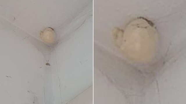 Sang chơi nhà bạn, người phụ nữ hoảng hốt khi thấy vật lạ xuất hiện trên trần nhà, vội lên mạng cầu cứu