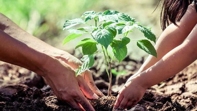 Nghiên cứu khẳng định trồng cây tại những khu vực này có thể khiến mây hình thành nhiều hơn, góp phần làm nguội Trái Đất