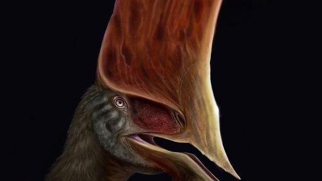 """Chán bắt ma túy, cảnh sát Brazil chuyển sang """"săn"""" hóa thạch rồi phát hiện ra loài khủng long bay có vẻ ngoài kỳ dị như động vật trên hành tinh Pandora"""