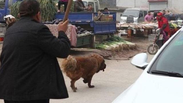 Định đánh chó vì dám cướp mất miếng thịt của mình, cảnh tượng xuất hiện sau đó khiến chủ nhân quỳ xuống khóc tức tưởi