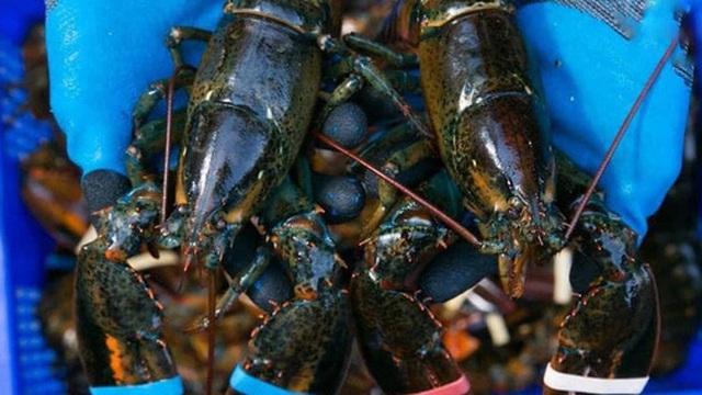 Hải sản chạy đua giảm giá sốc, tôm hùm Alaska chỉ từ 349.000 đồng/con, cua biển giá 250.000 đồng/kg