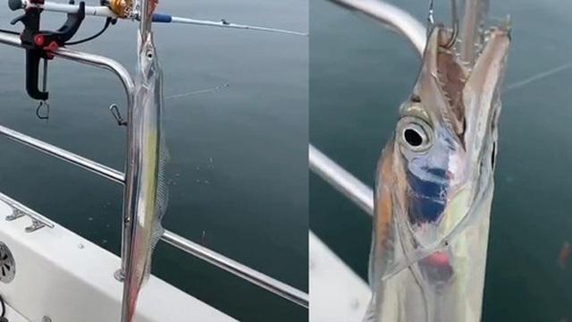 Người ngư dân bắt được con cá sáng bóng như gương, dân tình thi nhau trầm trồ vì quá ảo diệu