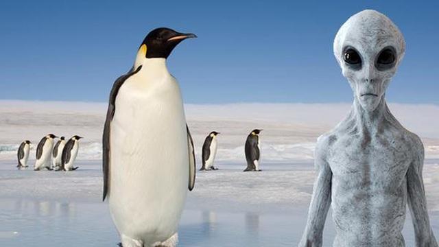 Chim cánh cụt là sinh vật từ hành tinh khác đến Trái Đất?