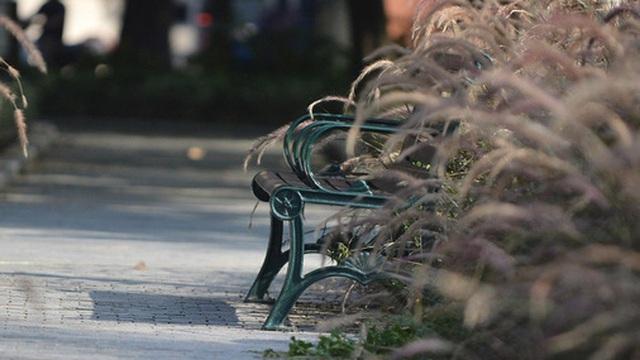 Ảnh: Hàng ghế ở hồ Gươm bị cỏ dại mọc bao quanh sau 2 tháng Hà Nội thực hiện giãn cách