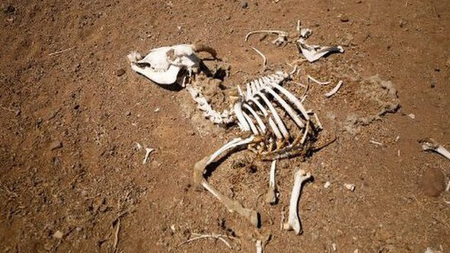 Đáng báo động, Madagascar đang trải qua nạn đói đầu tiên trên thế giới hoàn toàn do biến đổi khí hậu gây ra