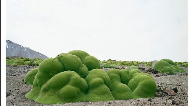 """Những loài thực vật kỳ quái """"sống dai"""" nghìn năm tuổi"""