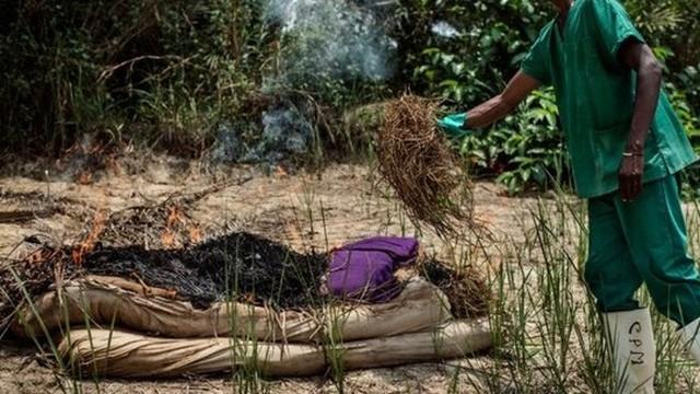 Hình ảnh đáng sợ: Hành trình virus Ebola phá hủy cơ thể con người