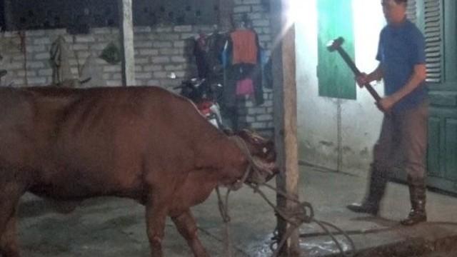 """Hình ảnh """"dùng búa tạ giết bò"""" bị phản ứng dữ dội"""