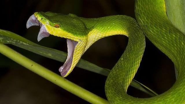 """Hoảng hồn phát hiện trăn, rắn dài cả mét """"lẩn trốn"""" trong xe"""