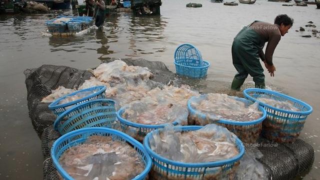 Trung Quốc thu giữ hơn 10 tấn sứa giả làm từ chất đông đặc
