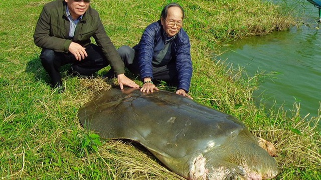 """Nhà ngoại cảm Phan Thị Bích Hằng lên tiếng về """"dự cảm cụ rùa"""""""