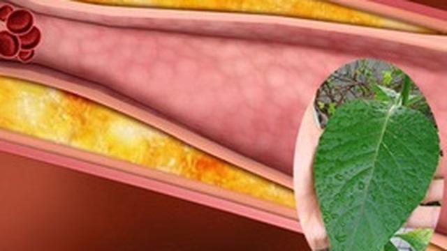 Muốn điều trị khỏi bệnh đường huyết, mỡ máu và huyết áp cao, đừng bao giờ mắc phải nhầm lẫn này