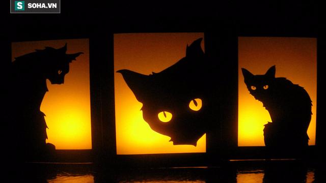 Những điều kỳ quái của lễ hội Halloween 31/10: Vì sao mèo đen bị cấm nhận nuôi dịp này?