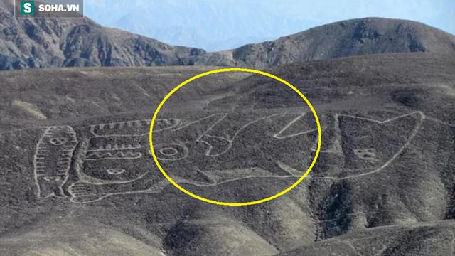 Phát hiện dị thường: Hình vẽ cá voi sát thủ dài 70m giữa sa mạc huyền bí ở Peru