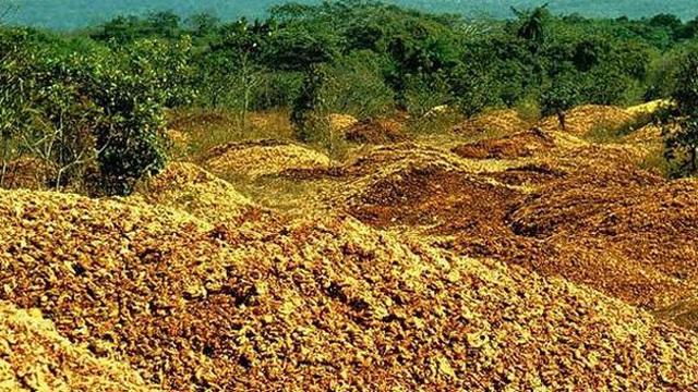 12.000 tấn vỏ cam bị quên lãng đã biến một vùng đất cằn cỗi trở thành rừng xanh như thế nào?