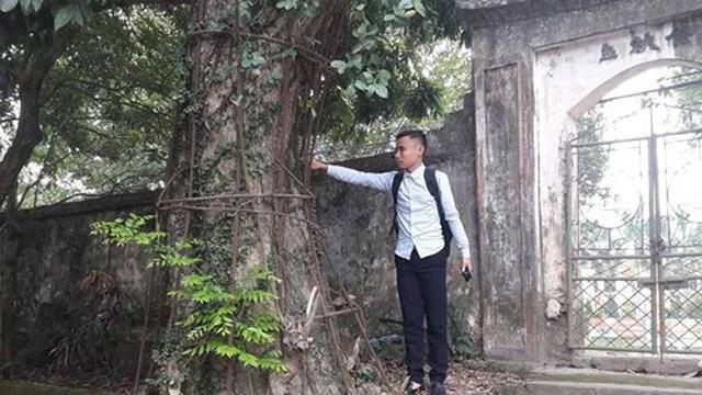 Vụ cây sưa trăm tỷ: Xã chưa nhận được văn bản của Hà Nội đồng ý cho bán