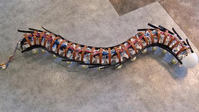 Các nhà khoa học vừa chế tạo thành công loại robot thân mềm có thể trườn như sâu