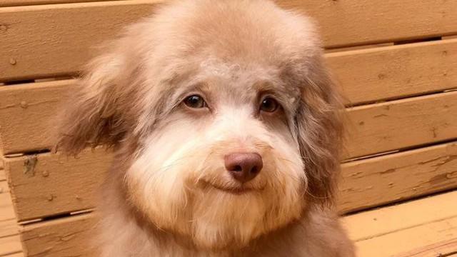 Chú chó lai nổi tiếng vì có gương mặt giống người
