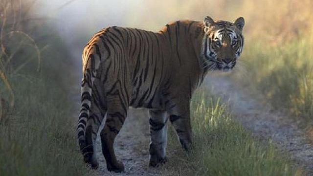 Hợp sức đẩy bạn ra ngoài hang làm mồi cho hổ, 8 người còn lại không ngờ lại phải chết trước