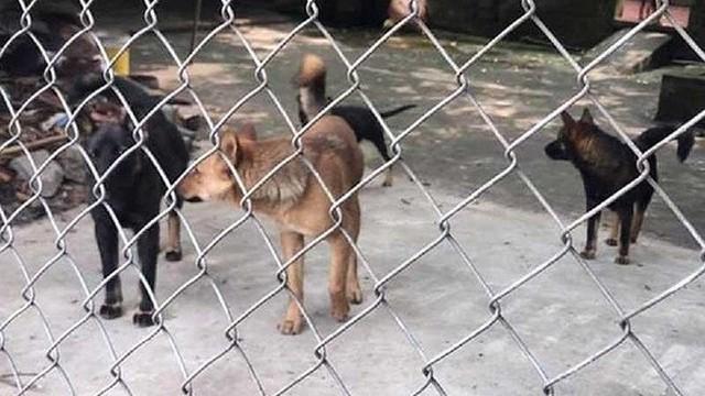 Khởi tố chủ đàn chó tấn công bé trai 7 tuổi tử vong ở Hưng Yên