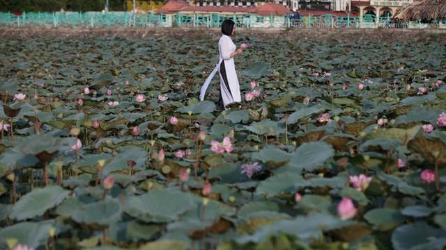 24h qua ảnh: Cô gái chụp với hoa sen trên hồ Tây lên báo Anh