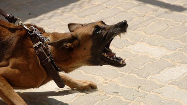 Chuyện của sói hoang và chó nhà: Người thích huênh hoang khoe mẽ đọc xong sẽ phải câm nín