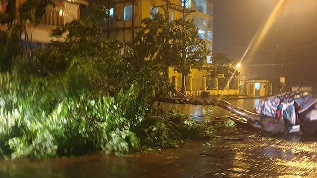 Bão số 3: Móng Cái - Quảng Ninh đang mưa rất to, cây cối bật gốc, đổ rạp trên đường