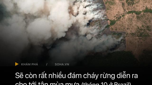 GĐ truyền thông Đài quan sát khí hậu Brazil trả lời báo Việt Nam: Tổng thống chỉ đang dùng 'thuốc giảm đau' mà thôi!