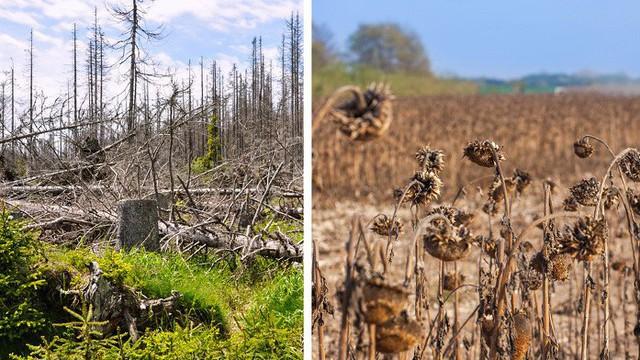 Những thảm họa đáng sợ nào có thể xảy ra nếu rừng Amazon biến mất hoàn toàn?