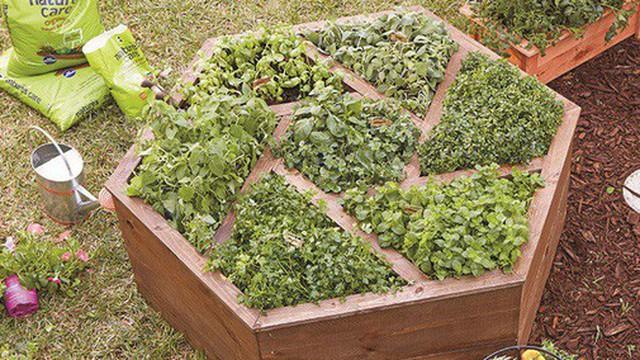 """Bạn đã biết tới xu hướng vườn kiểu mới đang hot """"rần rần"""" trong giới thiết kế sân vườn"""