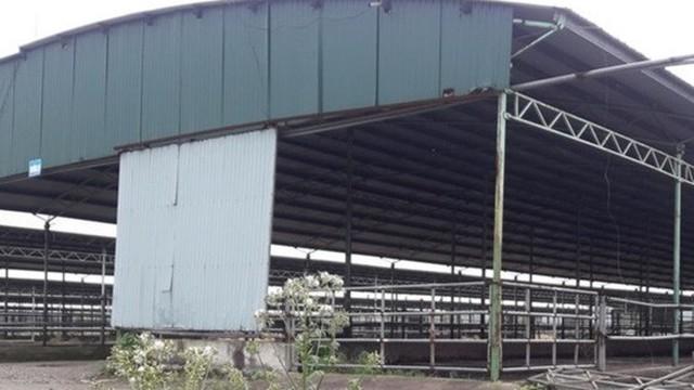 Dự án chăn nuôi hơn 254.000 con bò của Công ty Bình Hà: Không còn 1 con bò