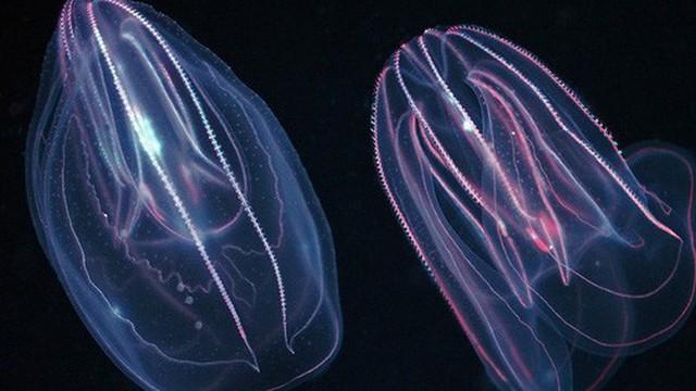 """""""Quái vật biển"""" cổ đại 18 xúc tu này có thể là tổ tiên loài sứa lược"""