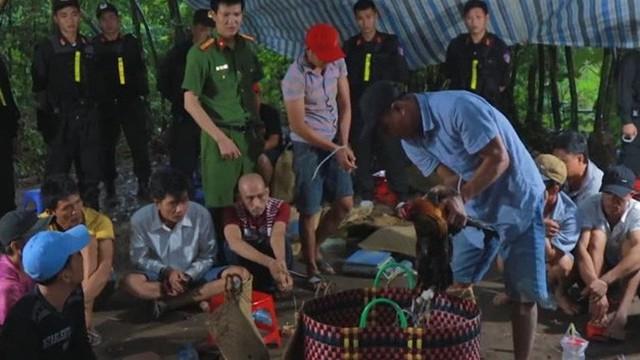 Triệt phá trường gà quy mô lớn ở Vĩnh Long