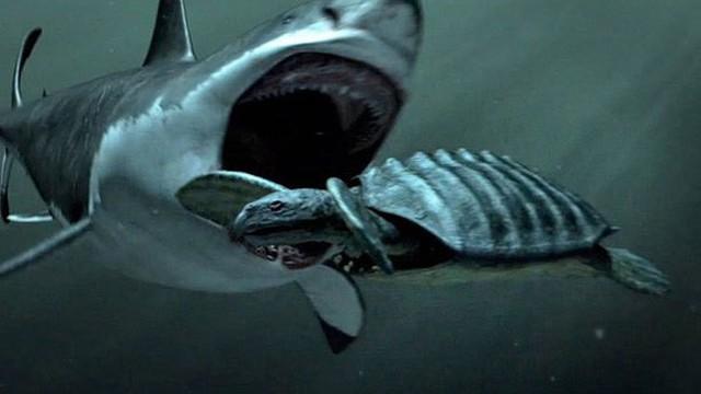 Giả thuyết về sự tồn tại về Megalodon, siêu cá mập có thật hay chỉ là cú lừa của truyền thông?