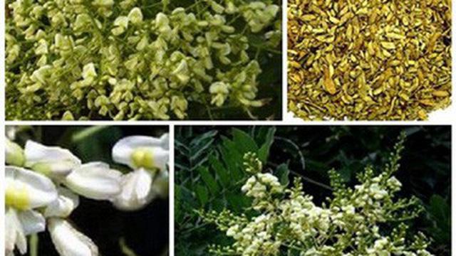 Nước uống và thuốc từ hoa hòe