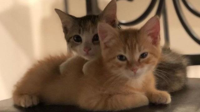 Công ty thuê hai chú mèo đáng yêu để giúp lập trình viên bớt căng thẳng, tăng cường tinh thần làm việc