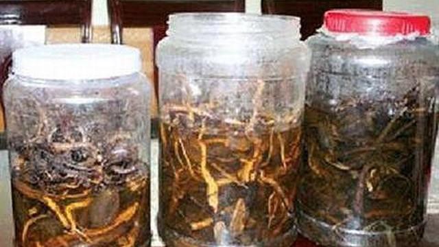 Uống rượu ngâm hạt cây rừng, 3 người chết, 2 người nguy kịch