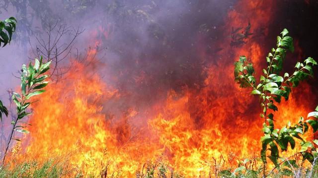 Lại cháy rừng dữ dội tại TT-Huế, biển lửa trùm lên 20ha cây lâm nghiệp tái sinh