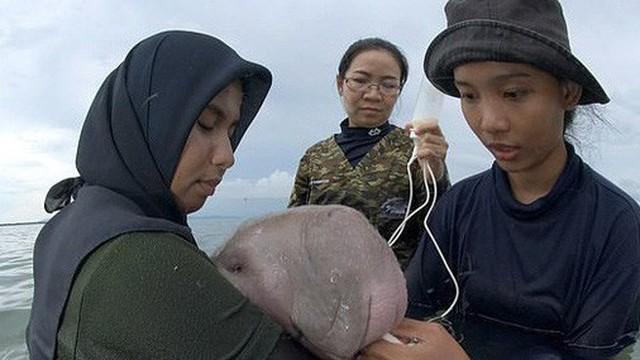 Dư luận phẫn nộ khi bò biển Marium được người dân Thái Lan yêu quý đã chết, trong ruột phát hiện toàn rác thải nhựa độc hại