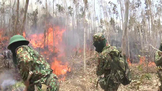 Gần 500 người dập đám cháy rừng kéo dài 2 ngày đêm