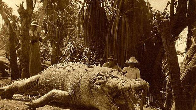 Người phụ nữ tiêu diệt con cá sấu lớn nhất Australia