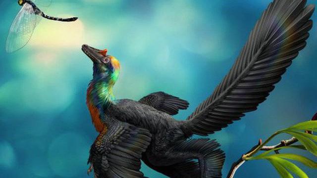 Rốt cuộc thì khủng long có màu sắc như thế nào?