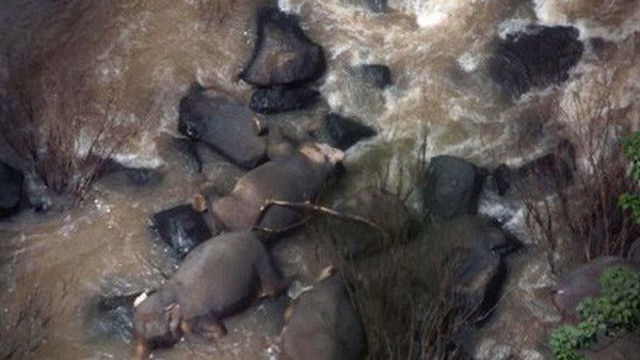 5 chú voi tử nạn khi lao xuống thác để cứu đồng loại rơi xuống đó