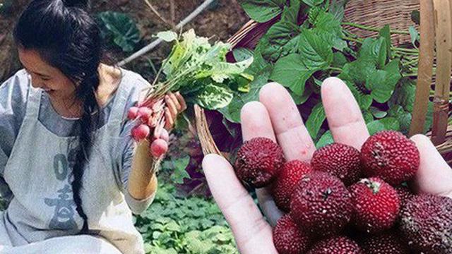 Cô gái trẻ sống những ngày an yên trong ngôi nhà thuê cùng khu vườn đủ loại rau trái