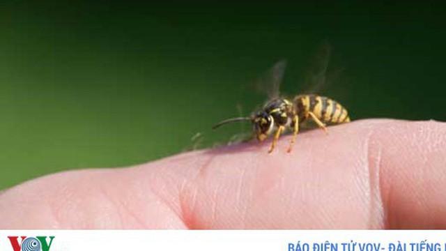 6 mẹo trị vết ong đốt tức thời